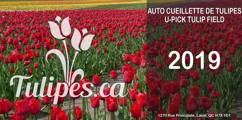 U-Pick Tulip Farm Quebec
