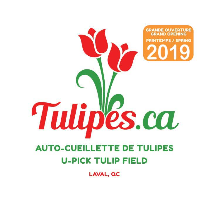 U-pick Tulip Field in Quebec