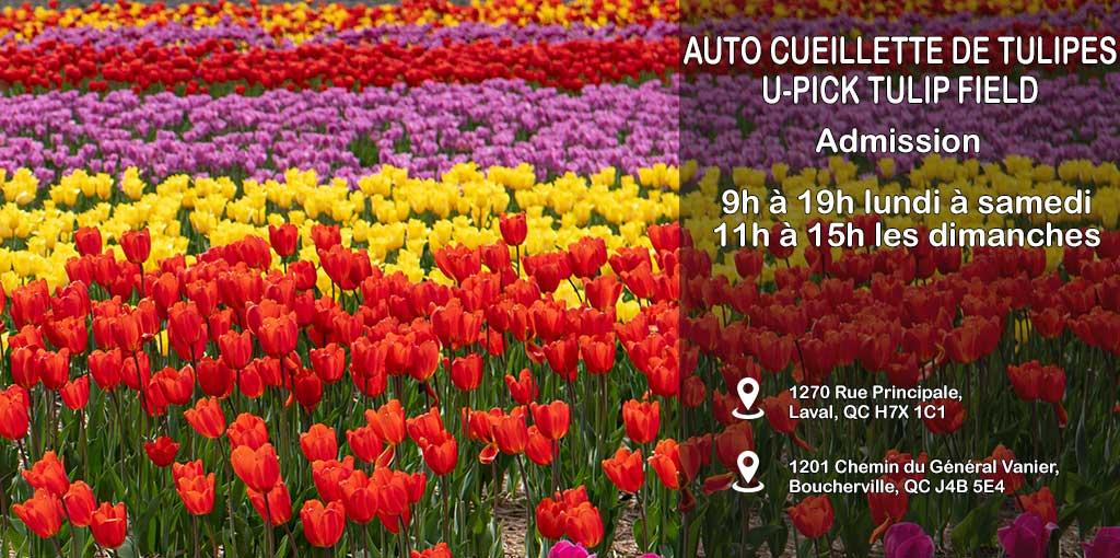 U-Pick Tulip Farm Quebec